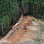 Amazzonia, aumenta la deforestazione e cresce la violenza contro i Popoli Indigeni