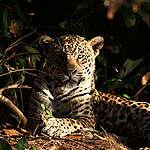 Greenpeace: La seconda foresta tropicale dell'America Latina, dopo l'Amazzonia, deforestata per la produzione della nostra carne