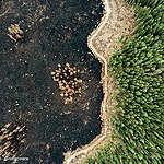 Quattro buoni motivi per difendere il suolo e le foreste