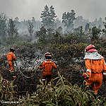 In Indonesia tornano gli incendi, foreste in fiamme