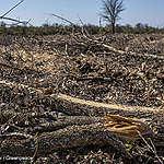 Il legame nascosto tra deforestazione e produzione di carne