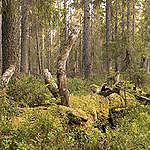 Deforestazione e diffusione di nuovi patogeni