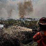 L'Indonesia brucia, multinazionali e commercianti di olio di palma ancora coinvolti