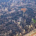 Giornata mondiale della biodiversità, proteggiamo l'Amazzonia!