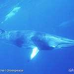 声明:海の生態系を守る保護区の設立を