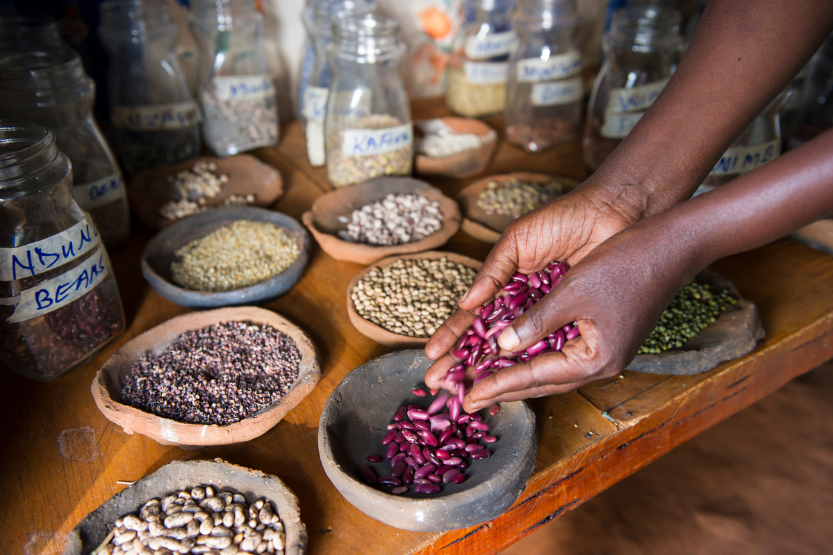 Ecological Seeds in Kenya. © Cheryl-Samantha Owen / Greenpeace