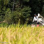 ネオニコ系農薬を使わないお米作りへ あなたにできる2つのこと