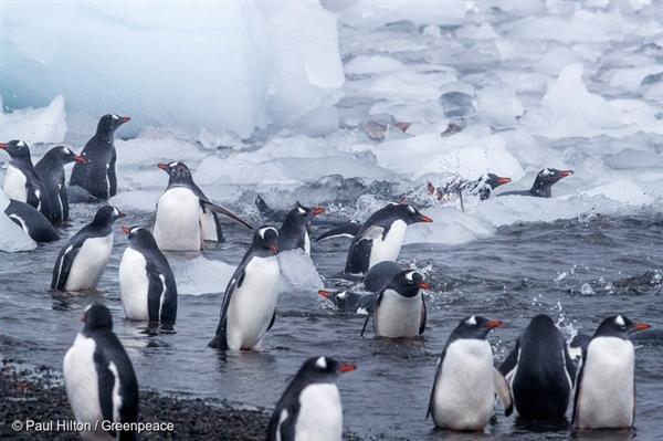 남극의 젠투 펭귄 서식지