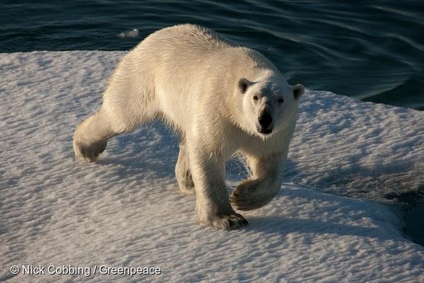 국제 북극곰의 날