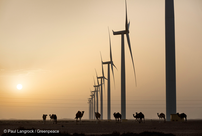 Copyright Paul-Langrock.de. Sunset over Africas greatest onshore wind farm. 131 wind turbines SWT 2.3 101 generate in total 301 MW electric power, in between dromedars. Dromedar, animal, perspective from the ground, moroccan, wind parc, power station, operated by TAREC, operator, energy, wind engine, generator, windmill powered plant, wind energy converter, blade, tower, nacelle, renewable, green, electrical, electricity, current, african, ideal for Desertec. Betreiber TAREC Tarfaya Energy Company. Afrikas groesster Windkraftpark Tarfaya. 131 Siemens Windkraftanlagen vom Typ SWT 2.3 101 erzeugen insgesamt 301 Megawatt elektrische Leistung, mittendrin Dromedare. Sonnenuntergang, Tier, Fauna, Dromedar, einhoeckriges Kamel, Windkraft, Windkraftanlage, Windenergie, Windrad, Windraeder, Windenergieanlage, Rotorblatt, Rotorblaetter, Gondel, Turm, Maschinenhaus, Strom, Windstrom, Elektrizitaet, erneuerbare, regenerative, alternative Energie, Vorbild fuer Desertec Initiative, DII. Tarfaya, western Sahara, southern Morocco, northern Africa. Westsahara, Suedmarokko, Marokko, Afrika, Nordafrika. 5. August 2016