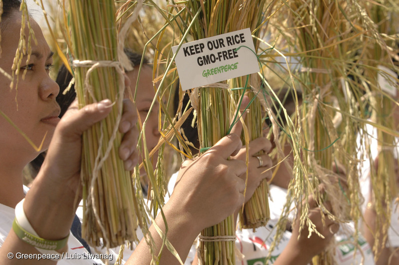 Greenpeace Activists wave post-harvest rice stalks at the Philippine Department of Agriculture in Manila, March 14, 2008 to remind the government to keep the country's rice supply free of risky contamination from genetically-modified (GMO) varieties. The peaceful protest, at the eve of World Consumer Rights Day, is part of Greenpeace's on-going campaign to protect rice from GMO contamination which poses inherent risks to consumer health, the environment, and farmers livelihoods.A Greenpeace activist hangs post-harvest rice stalks at the Philippine Department of Agriculture in Manila, March 14, 2008. Greenpeace is reminding the government to keep the country's rice supply free of risky contamination from genetically-modified (GMO) varieties. The peaceful protest, at the eve of World Consumer Rights Day, is part of Greenpeace's on-going campaign to protect rice from GMO contamination which poses inherent risks to consumer health, the environment, and farmers livelihoods. (c)Greenpeace/Luis Liwanag