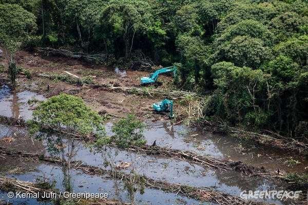 팜유로 인해 산림 벌채가 일어나고 있는 중앙 칼리만탄