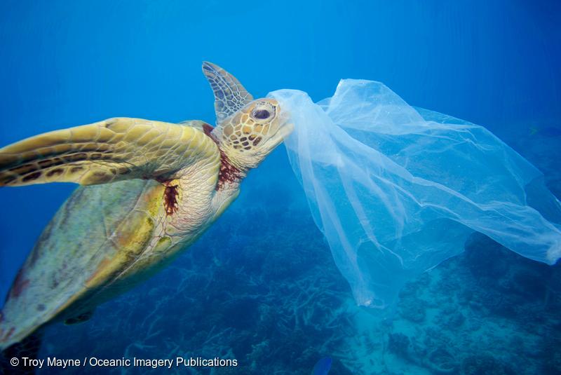 머리에 플라스틱 비닐을 뒤집어 쓴 거북이