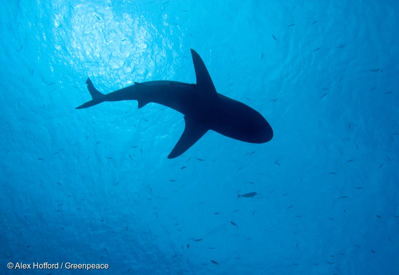 팔라우 바닷 속을 헤엄치는 상어