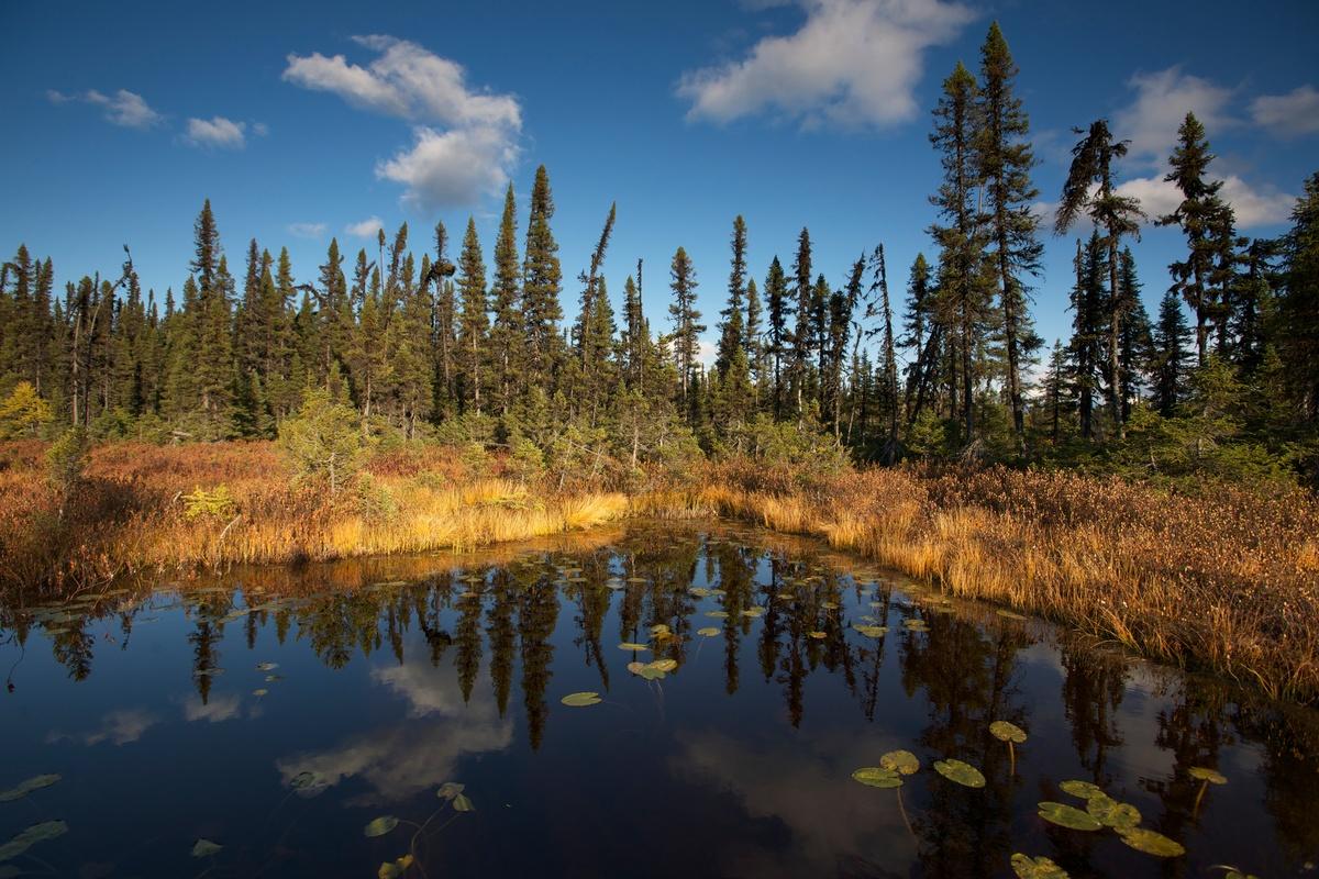 Boreal Forest - Montagnes Blanches, QuebecKanada, Quebec, Borealer Wald, White Mountains
