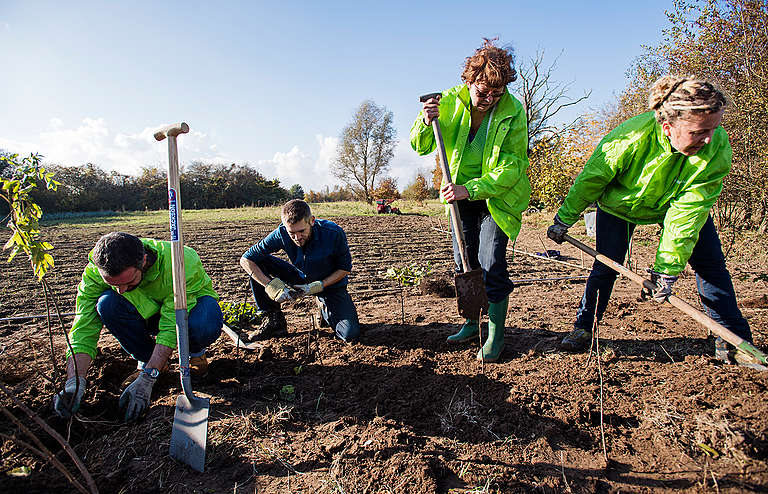 Planting a Bee Hedge in the Netherlands