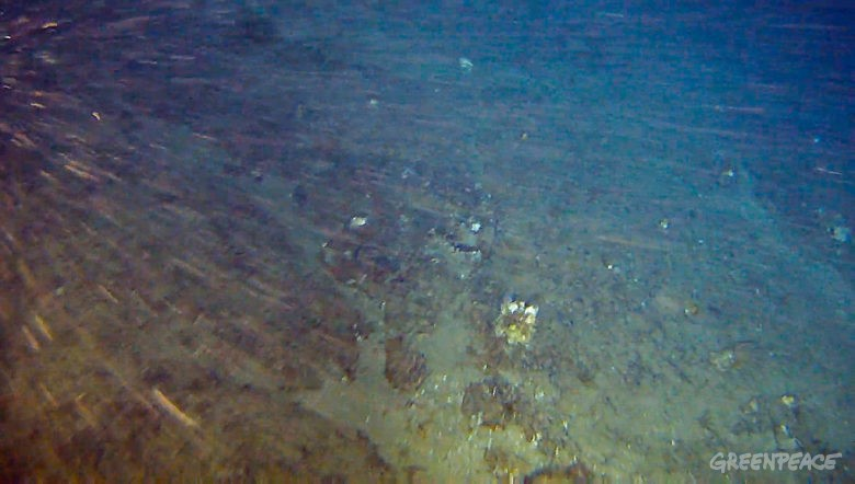 ENGLISH BELOWBanco de rodolitos coberto por algumas esponjas-do-mar na região dos Corais da Amazônia, a 180 metros de profundidade e 120 km da costa brasileira. A formação está dentro da bloco onde a empresa Total quer buscar petróleo e foi descoberta durante a expedição do Greenpeace na região. O navio Esperanza está no Brasil para uma expedição científica sobre os Corais da Amazônia. Pesquisadores e o time do Greenpeace buscam mais informações sobre esse bioma, que é único no mundo. Empresas internacionais têm planos de explorar petróleo na região próxima aos Corais em breve. Especialistas, no entanto, alertam que um vazamento ali ameaçaria de forma irreversível o bem-estar do ecossistema marinho e das pessoas que habitam a costa. Foto Greenpeace.Rhodolith field covered by some sponges in the Amazon Reef region, 180 meters deep and 120km off the northern coast of Brazil. The formation is where French company Total intends to drill for oil and was found during a Greenpeace expedition in Brazil. The ship Esperanza is back to Brazil for a scientific expedition about the Amazon Reef. Researchers and the Greenpeace team seek for more information about the biome that is unique in the world. International oil companies want to drill for oil within a few kilometers of the Amazon Reef soon. However, experts warn that an oil spill in the area would irreversibly threaten the well being of the ecosystem and people living in the coast. Photo Greenpeace.