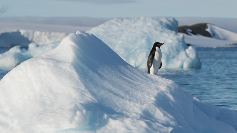 One of the largest Adélie penguin colonies in Antarctica is situated in Hope Bay on Trinity Peninsula, which is the northernmost part of the Antarctic Peninsula. Just outside Hope Bay, the Antarctic Sound connect the Bransfield Strait to the Weddell Sea. In this area, Greenpeace is about to conduct submarine-based scientific research to strengthen the proposal to create the largest protected area on the planet, an Antarctic Ocean Sanctuary.