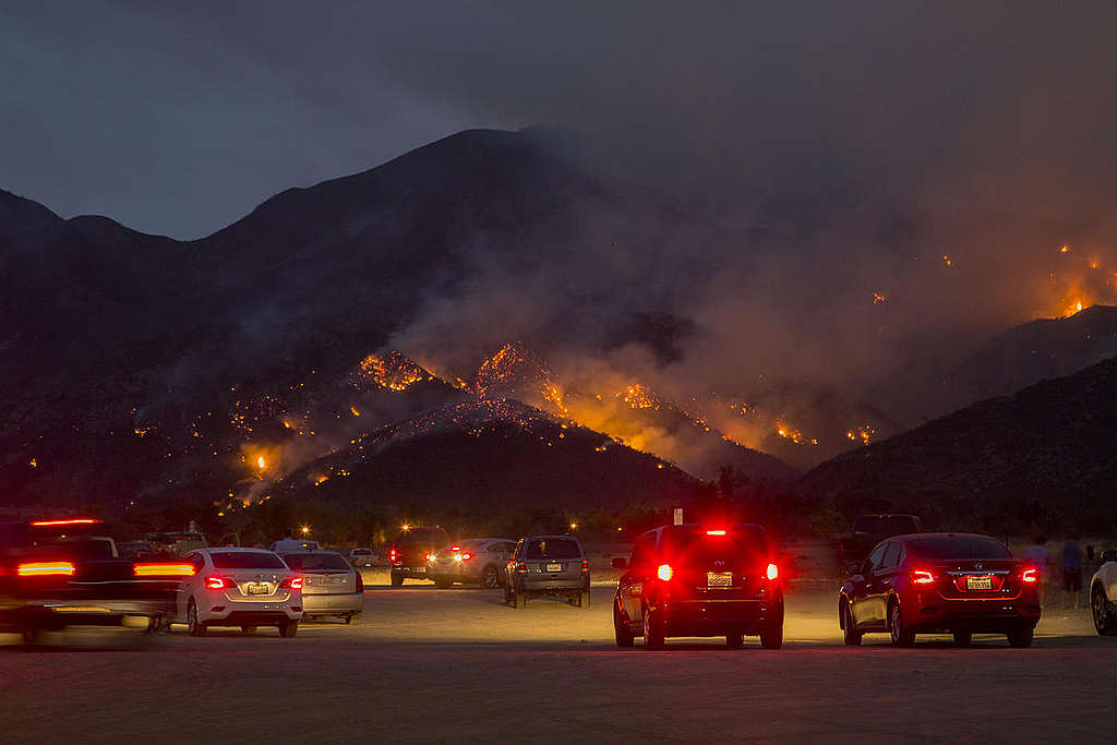California Holy Wild Fire