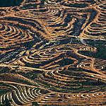 33/5000 Production d'huile de palme à Kalimantan