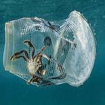 L'un des écosystèmes les plus riches au monde envahi par le plastique