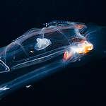 Unterwasserleben auf den Azoren