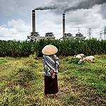 A shepherdess watches over her flock of sheep that graze near a coal power plant in Jepara, Central Java. Coal burning causes a trail of destruction that is no less harmful than coal mining. Coal powered plants emit pollutants such as carbon dioxide, sulphur dioxide, nitrogen oxide and methane, which are major air pollutants and one of the main contributors to climate change.