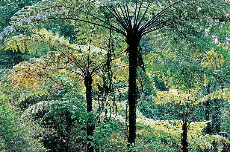 Forests Planet der Walder Book 2000. © Wolfgang Pekny / Greenpeace