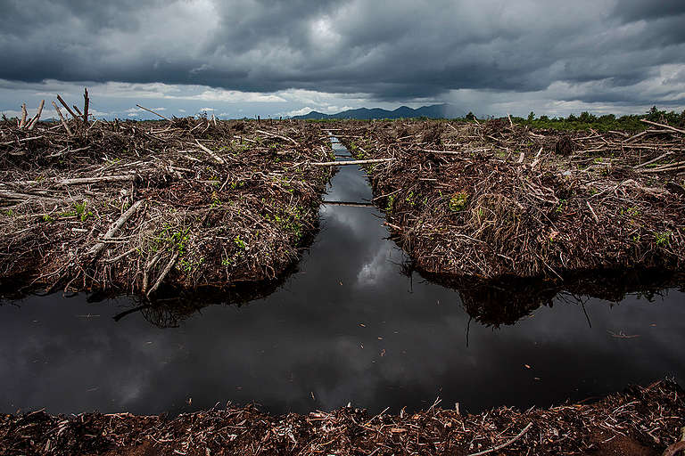 Oil Palm Concessions in West Kalimantan. © Ulet  Ifansasti / Greenpeace