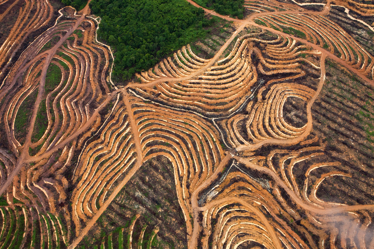 Palm Oil Production in Kalimantan. © Daniel Beltrá / Greenpeace