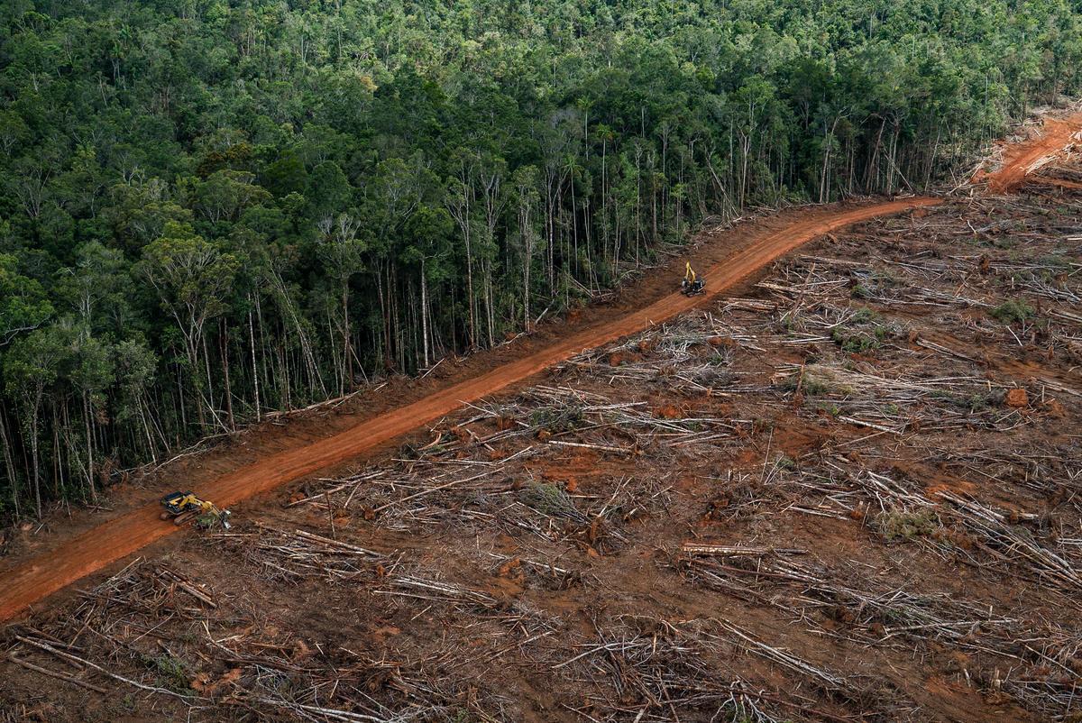 PT Megakarya Jaya Raya (PT MJR) Oil Palm Concession in Papua. © Ulet  Ifansasti / Greenpeace