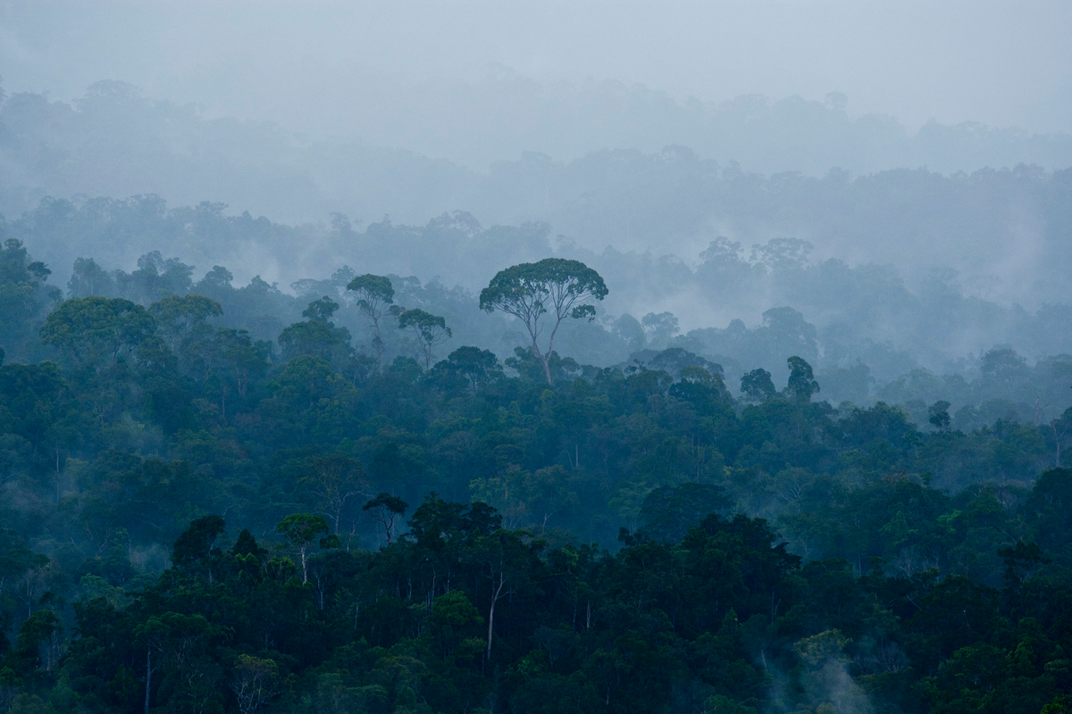 Intact Forest in Central Kalimantan. © Ulet  Ifansasti / Greenpeace