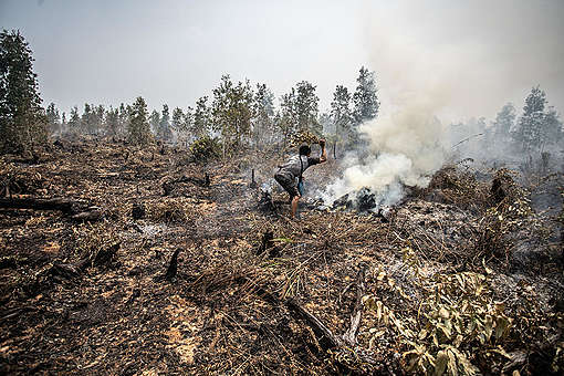 Forest Fires in PT GAL, Central Kalimantan. © Jurnasyanto Sukarno / Greenpeace