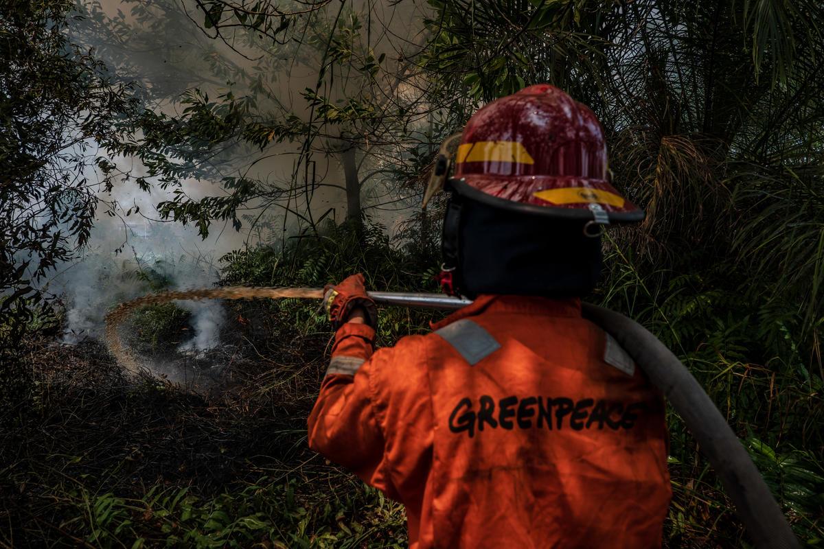 Forest Fires in Central Kalimantan. © Ulet Ifansasti / Greenpeace
