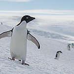 بعثة غرينبيس في أنتارتيكا/ القطب الجنوبي تجد تلوثاً بلاستيكياً وكيماويات خطرة في مياه أنتاركتيكا