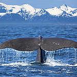 لماذا محيطاتنا مهمة ويجب ان نؤمن لها الحماية التي تحتاجها؟
