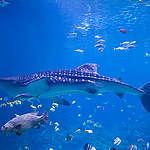 """""""غرينبيس"""" تطلق بعثة نموذجية من القطب الى القطب في مهمة التصديق على معاهدة عالميّة للمحيطات"""