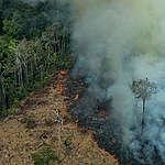 الأمازون تحترق وتحتاج اليك..