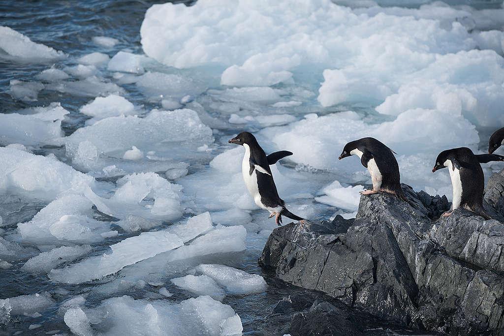 Acciones por el cambio climático © Christian Åslund