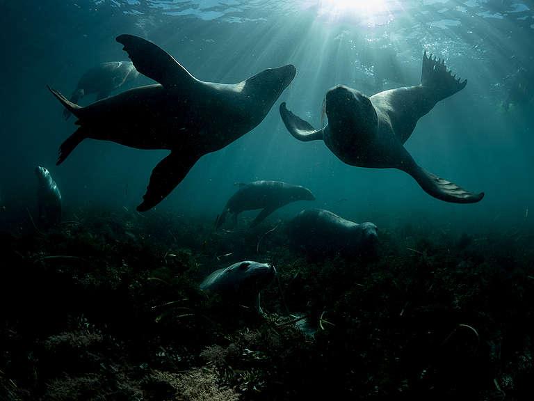 Sea Lions near Hopkins Island. © Michaela Skovranova