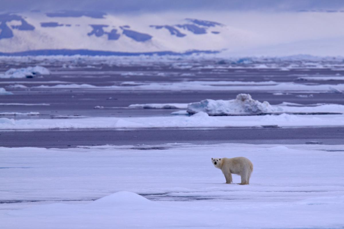 Polar Bear. © Bernd Roemmelt
