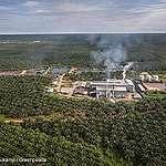 Estas marcas están detrás de la deforestación para sembrar aceite de palma