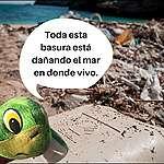 Conoce a Xochi, la tortuga activista que salió del mar