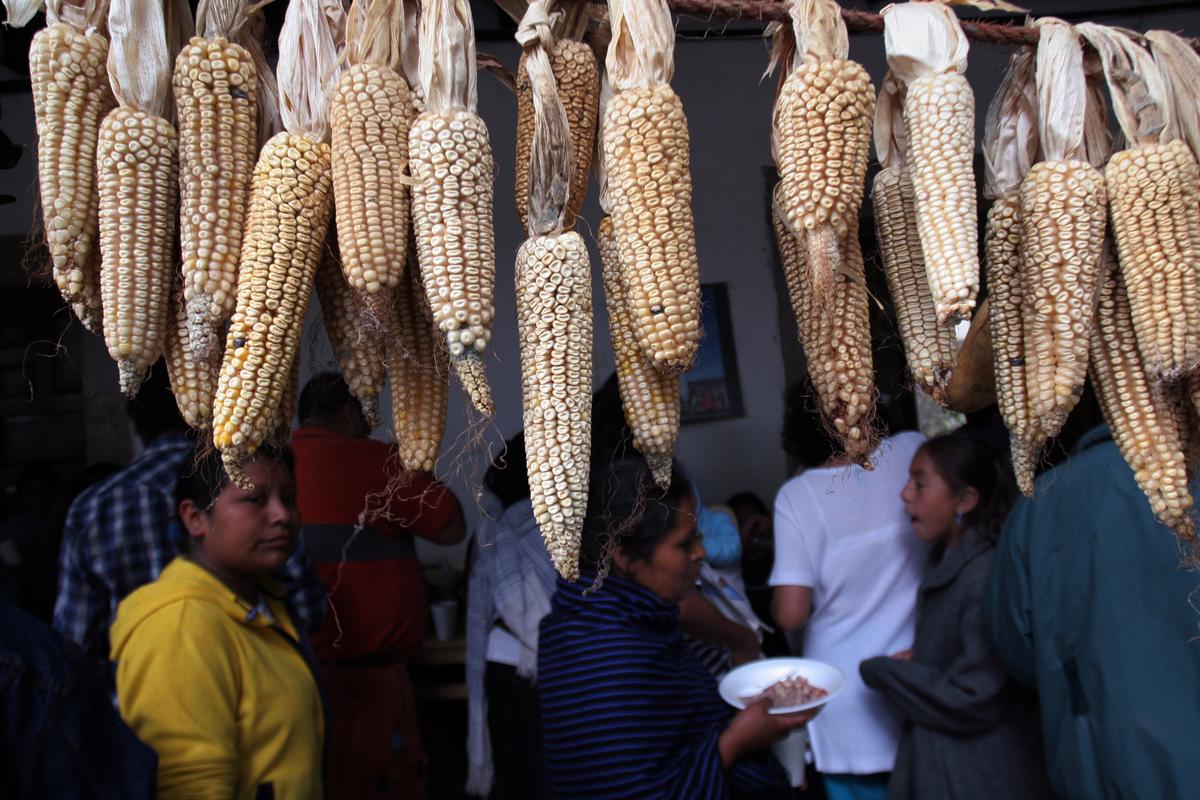 Celebration to Honour GE Free Corn in Mexico. © Gustavo Graf