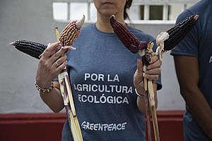 Activistas visitan al presidente electo para recordarle la protección del maíz. © Ilse Huesca Vargas