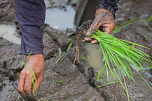 Organic Farming in Negros. © Andri Tambunan