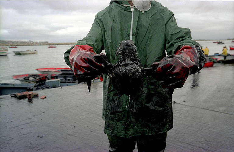 Bird Affected by Oil Spill in Muxia. © Pedro Armestre