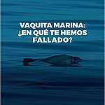 Vaquita marina: ¿en qué te hemos fallado?