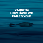 Vaquita: How have we failed you?