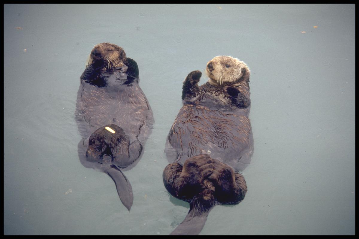 Nutrias  © Greenpeace / Henk Merjenburgh